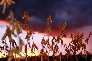 Ministério já estima o valor da produção agropecuária em R$ 450 bilhões em 2014