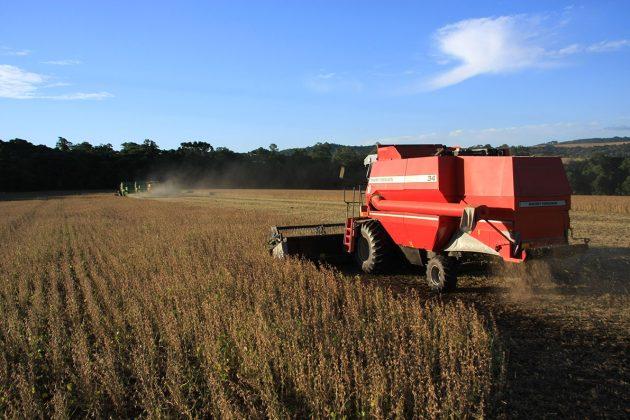 soja-lavoura-grão-colheita-mão-3-(134)