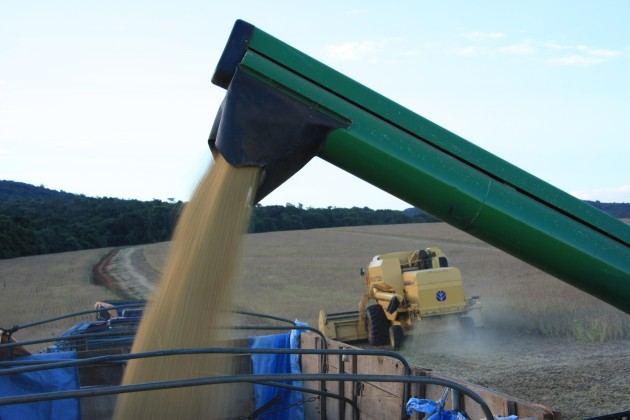 soja lavoura grão colheita mão 3 (159)