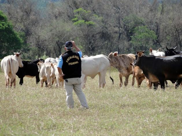 Vaca Louca03