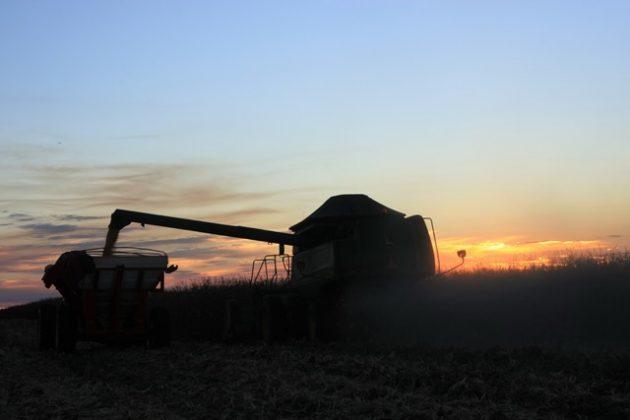 colheita milho espiga tibagi por do sol (63)
