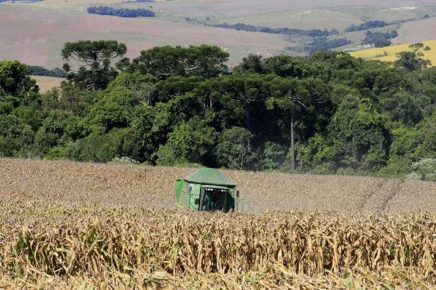 milho-colheita-(3)