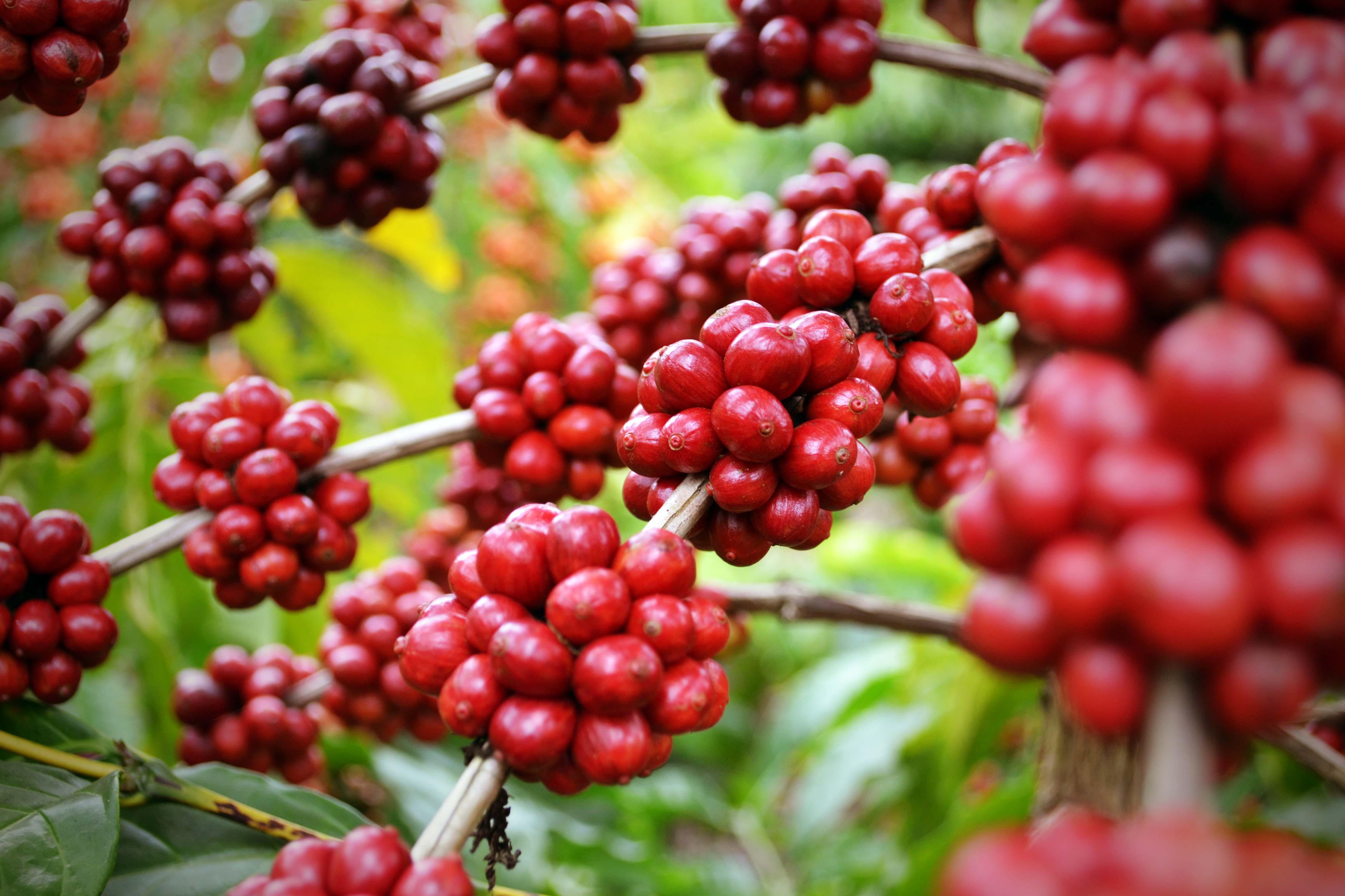 Ricardo Ferraço anuncia medidas para barrar importação de café